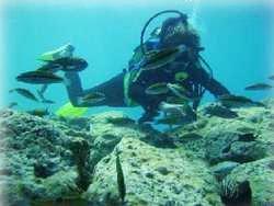 découverte de la faune marines sur des récifs à faible profondeur